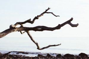 Vishakha Nakshatra Forked Branch of a Tree