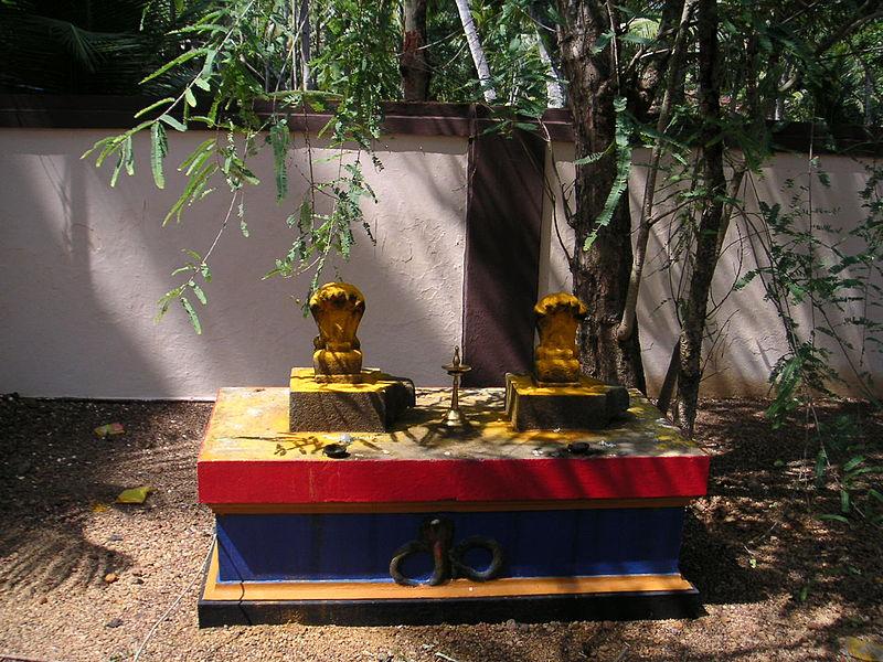 Snake worship on Nag Panchami