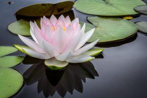 Image of Shankha Yoga