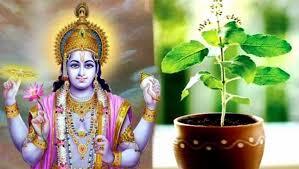 Tulsi plant and Lord Vishnu