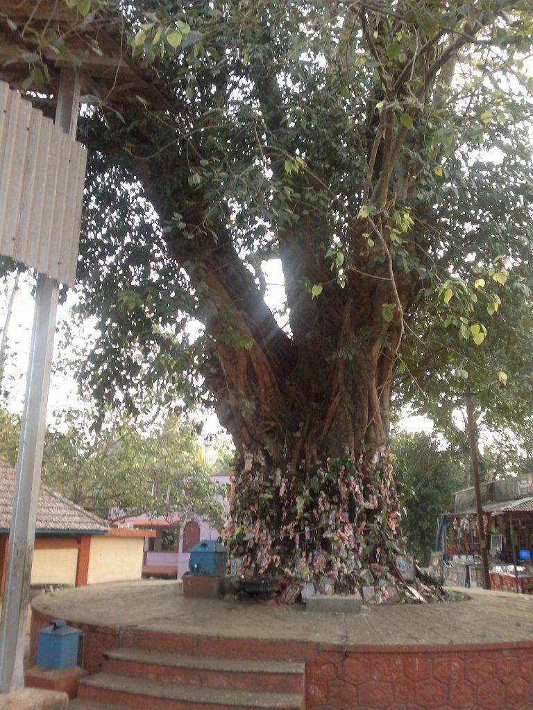 Pala Tree With Nails