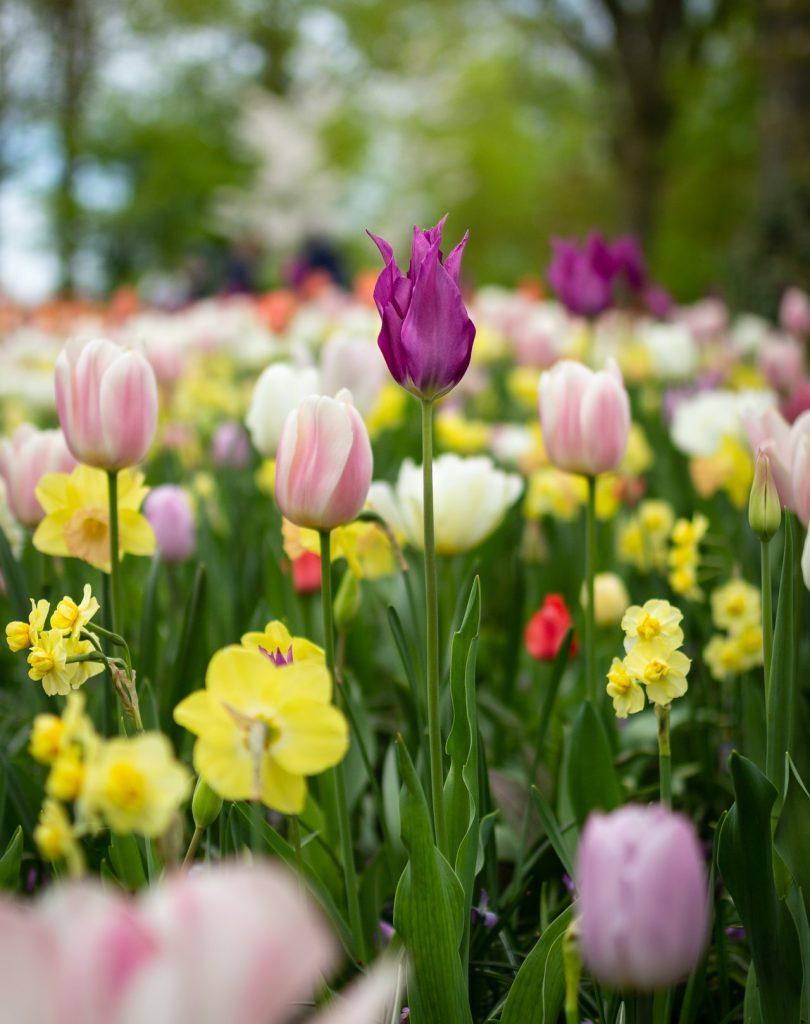 Garden And Landscape Design: Vedic Astrology Career Analysis